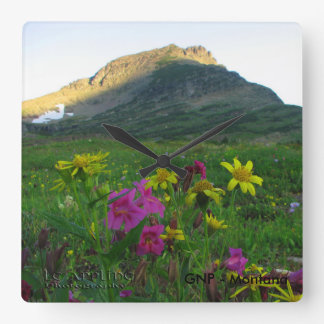 Square Clock Glacier National Park Wildflowers