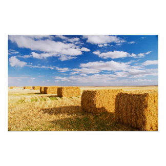 Square hay bales poster