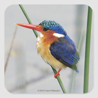 Square seal sticker of kingfisher