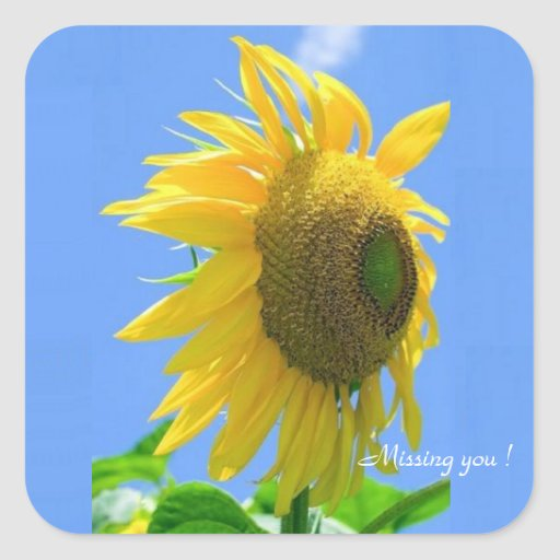 Square Sticker, Missing you ! Summer Sunflower