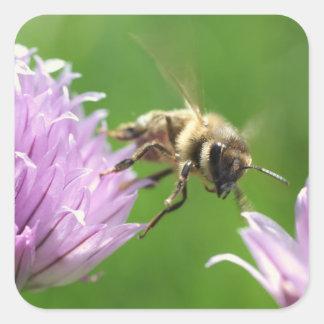 Square Stickers, Glossy - Honeybee Square Sticker