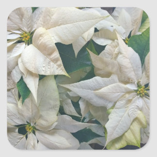 Square White Poinsettia Sticker