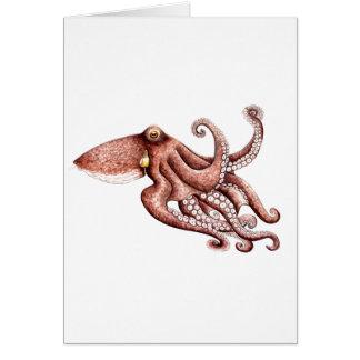Squid - Octopus vulgaris Card