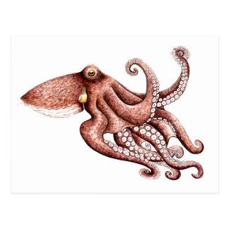 Squid - Octopus vulgaris Postcard