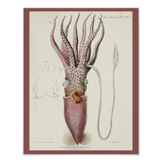 Squid Purple Cephalopod Sea Creatures Art Print