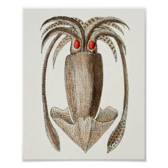 Squid Vintage Cephalopod Sea Creatures Art Print