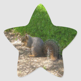 Squirrel #3 Stickers