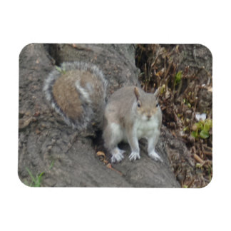 """Squirrel 3""""x4"""" Magnet"""