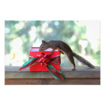 Squirrel and Christmas Present Photo Art