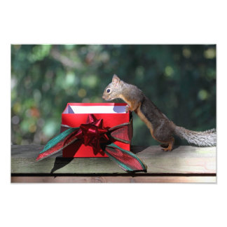 Squirrel and Open Present Photographic Print