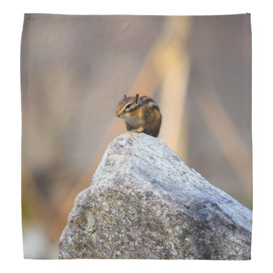 Squirrel Bandanna