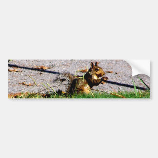 Squirrel By The Road Bumper Sticker
