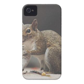 squirrel Case-Mate iPhone 4 case