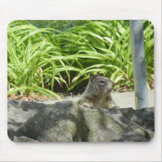 Squirrel Chilling in the Shade Mouse Pad