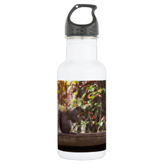 Squirrel Chow Time 532 Ml Water Bottle