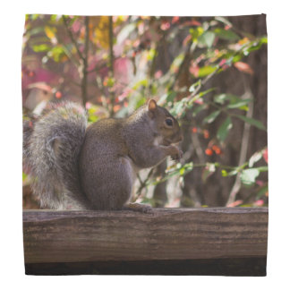 Squirrel Chow Time Bandana