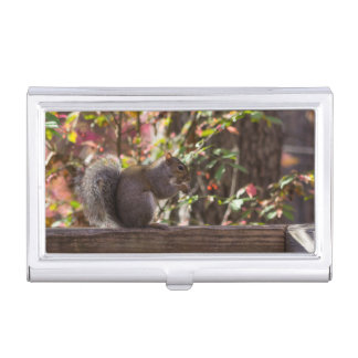 Squirrel Chow Time Business Card Holder