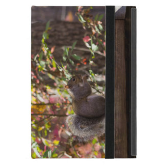 Squirrel Chow Time Case For iPad Mini