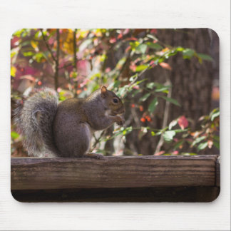 Squirrel Chow Time Mouse Pad