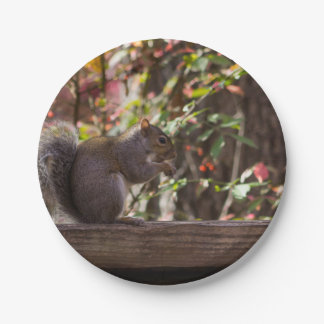 Squirrel Chow Time Paper Plate