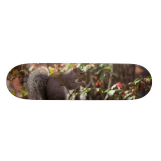 Squirrel Chow Time Skate Deck