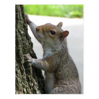 Squirrel Climbing Tree Postcard