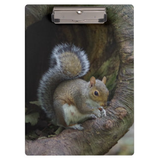 Squirrel Clipboard