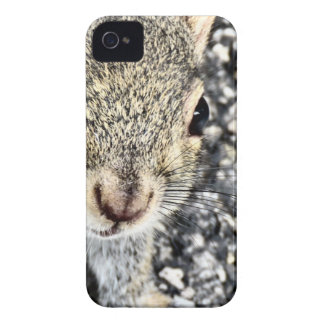 Squirrel Close Up! iPhone 4 Cases