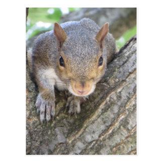 Squirrel Close Up Postcard