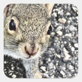Squirrel Close Up! Square Sticker