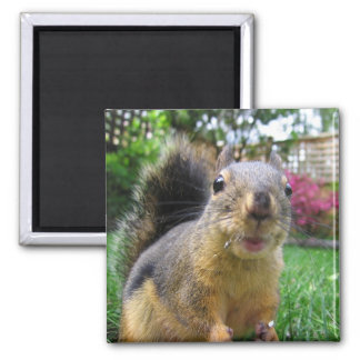 Squirrel Closeup Square Magnet