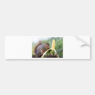 Squirrel Corn Bumper Sticker