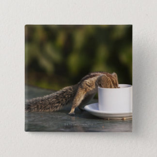 Squirrel drinking from coffee cup at Indian 2 Inch Square Button