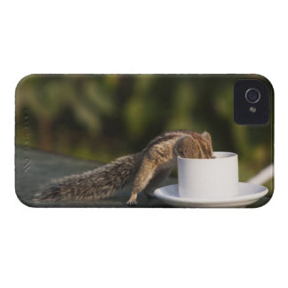 Squirrel drinking from coffee cup at Indian iPhone 4 Case