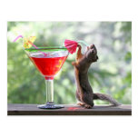 Squirrel Drinking Tropical Drink Post Cards