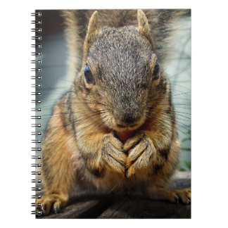Squirrel Eating 1 Notebook
