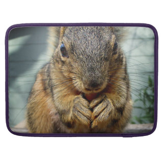 Squirrel Eating 1 Sleeve For MacBooks