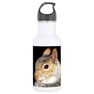 Squirrel eating a nut 532 ml water bottle