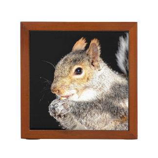 Squirrel eating a nut desk organizer