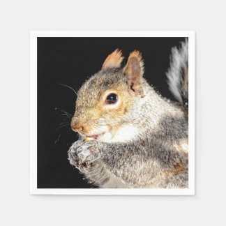 Squirrel eating a nut napkin