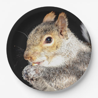 Squirrel eating a nut paper plate