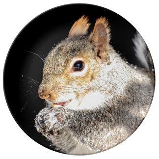 Squirrel eating a nut plate
