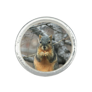 Squirrel Eating a Nut Ring