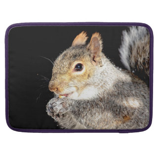 Squirrel eating a nut sleeve for MacBooks