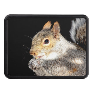 Squirrel eating a nut trailer hitch cover