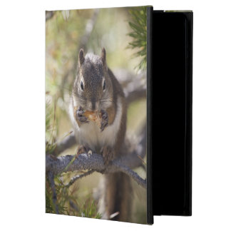 Squirrel eating a pine cone cover for iPad air