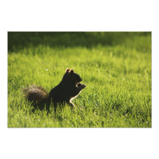 Squirrel eating acorn on green grass nature photo print