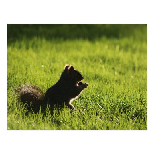squirrel eating acorn on green grass nature postcard
