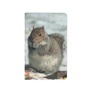 Squirrel Eating Cute Little Winter Wildlife Photo Journal