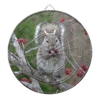 Squirrel eating dartboard